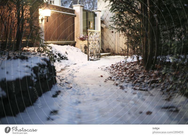 winter Winter Snow Tree Bushes Garden Deserted Fence Wooden fence Garden door Garden path Dark Cold Nature Lanes & trails Street lighting Lantern Colour photo