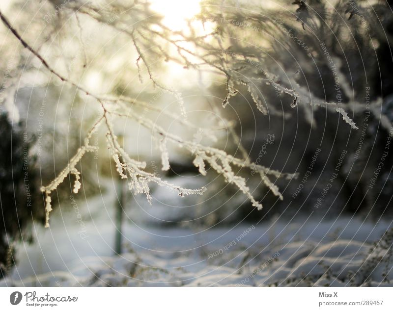 winter Nature Winter Beautiful weather Ice Frost Snow Tree Garden Cold White Branch Twig Hoar frost Colour photo Exterior shot Deserted Morning Dawn Light