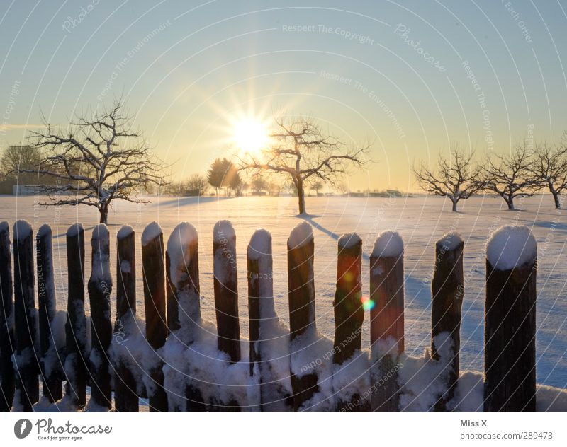 winter Landscape Cloudless sky Sun Sunrise Sunset Winter Beautiful weather Tree Meadow Cold White Snowscape Fence Colour photo Exterior shot Deserted