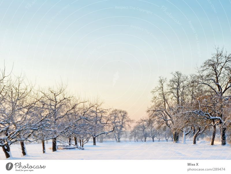 winter Landscape Winter Ice Frost Tree Meadow Cold White Snowscape Fruittree meadow Cloudless sky Colour photo Exterior shot Deserted Copy Space top Morning