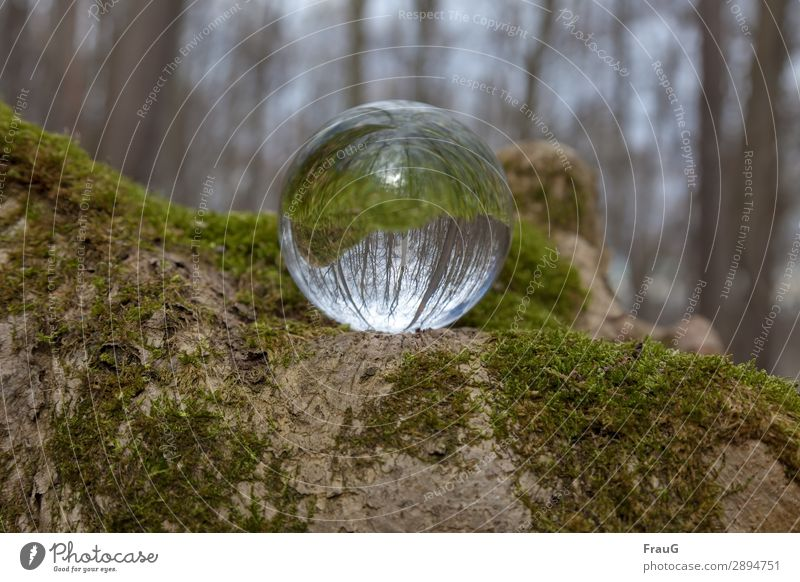 back to the roots | forest reflected in sphere Nature Forest plants flora rootstock Moss trees Go crazy Sphere reflection Spring Green naturally Day Deserted