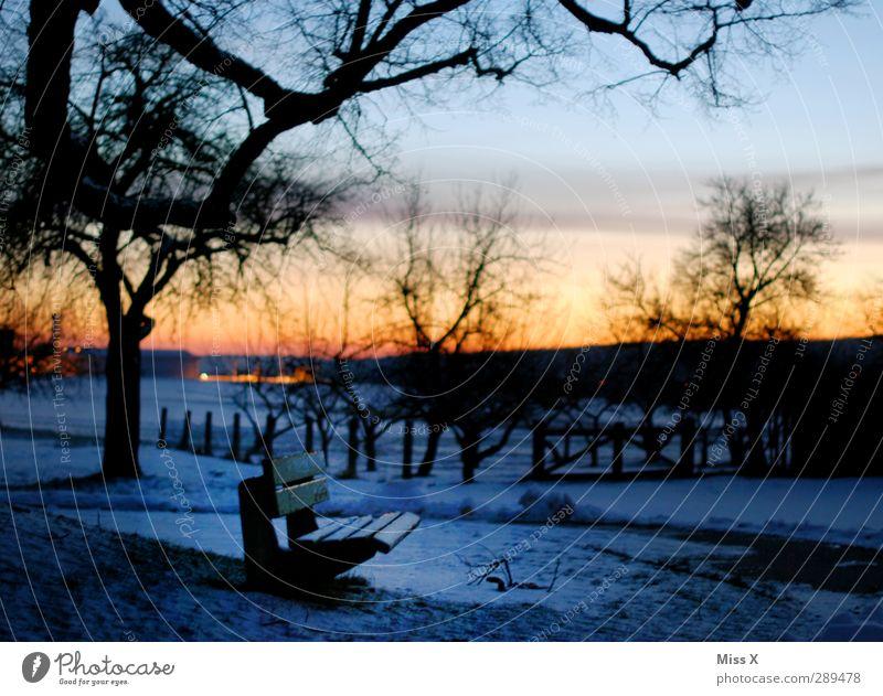 winter Landscape Sunrise Sunset Winter Tree Park Cold Snowscape Park bench Colour photo Multicoloured Exterior shot Deserted Dawn Twilight