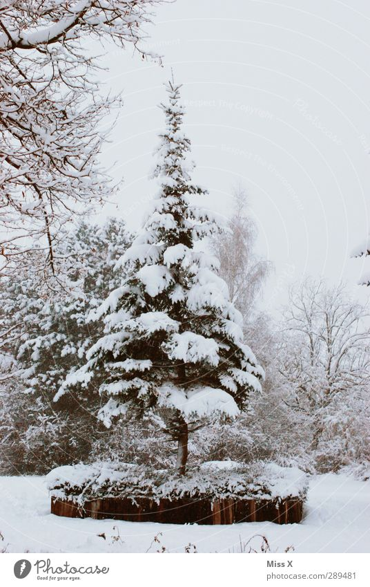winter Winter Ice Frost Snow Tree Garden Park Cold White Fir tree Colour photo Subdued colour Exterior shot Deserted
