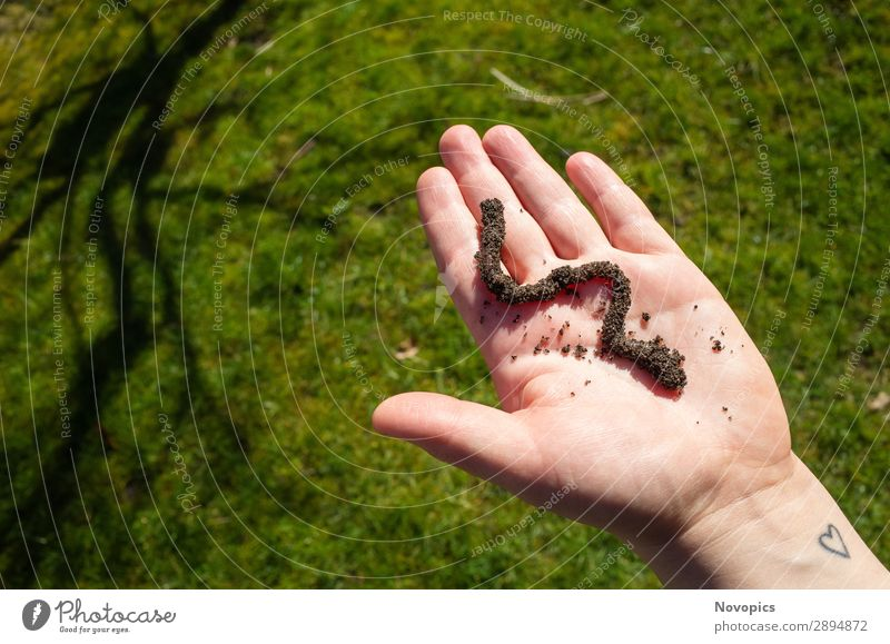 Earthworm On A Hand Vegetable Human being Plant Animal Wild animal Worm 1 Observe Touch Sustainability Brown Green Urban gardening extension cultivation