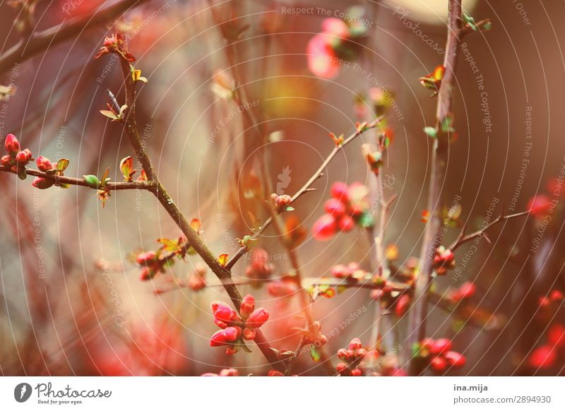 _ Environment Nature Plant Spring Summer Bushes Blossom Garden Park Blossoming Growth Beautiful Pink Moody Spring fever Optimism Esthetic Contentment Fragrance