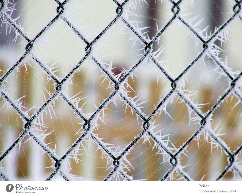 Crystal Winter Poetry Fence Wire netting Cold Ice crystal Grating Freeze Depth of field Blur Clink Frozen Reticular White Black Crystal structure Snow