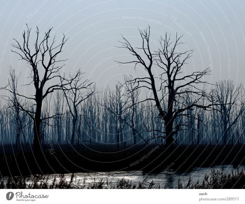 Nature Blue Plant Tree Loneliness Winter Black Forest Environment Dark Autumn Death Wood Sadness Rain Fear