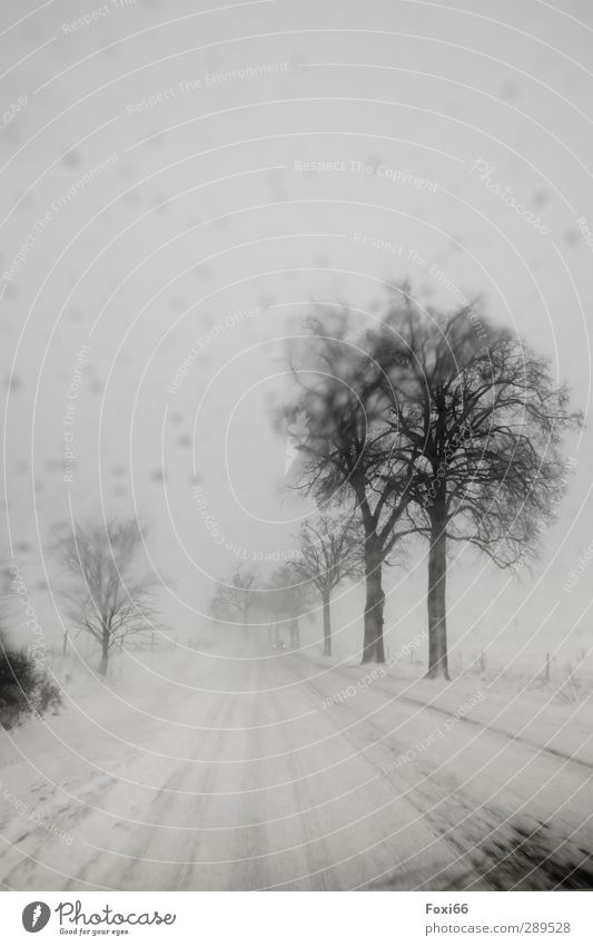 Sky White Tree Loneliness Winter Landscape Black Dark Cold Street Snow Snowfall Moody Ice Wind Threat