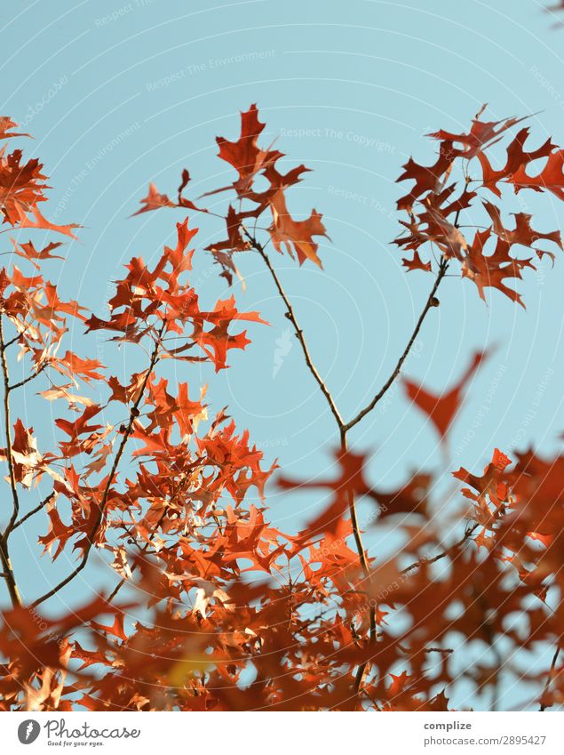 It's going to be autumn! Vacation & Travel Mountain Hiking Environment Nature Sky Sun Autumn Climate Climate change Plant Tree Leaf Garden Park Forest Exotic