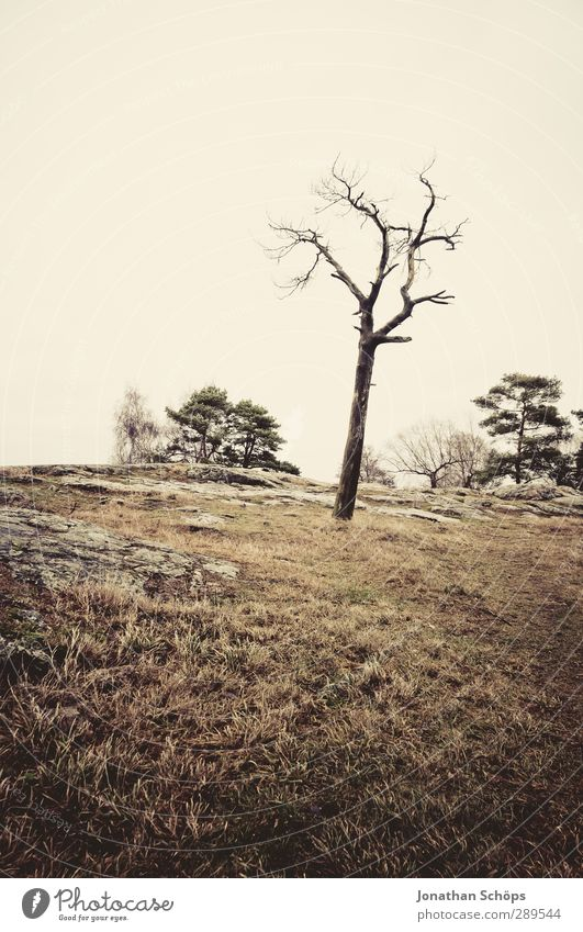 Nature Tree Winter Landscape Environment Death Sadness Brown Individual Gloomy Expressionless Dune Bleak Bad weather Dreary Badlands