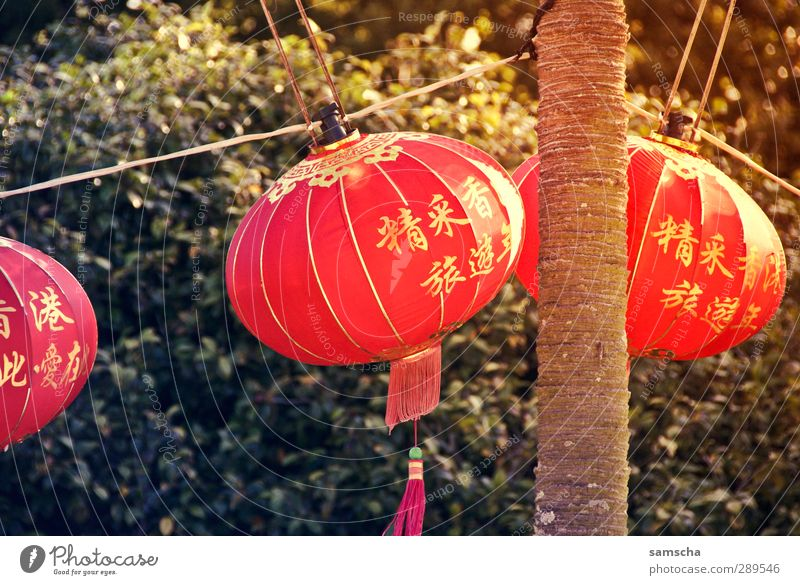 lantern festival Far-off places Feasts & Celebrations New Year's Eve Fairs & Carnivals Culture Event Park Hang Illuminate Esthetic Bright Red Lantern Lampion