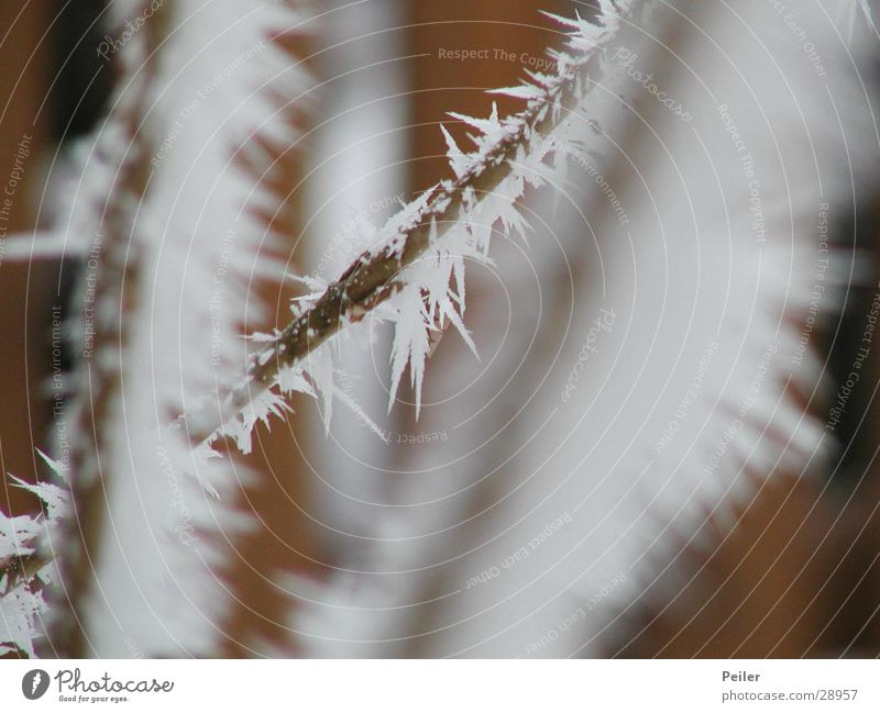 Winter shrub in the morning Cold Ice crystal White Brown Crystal structure Snow