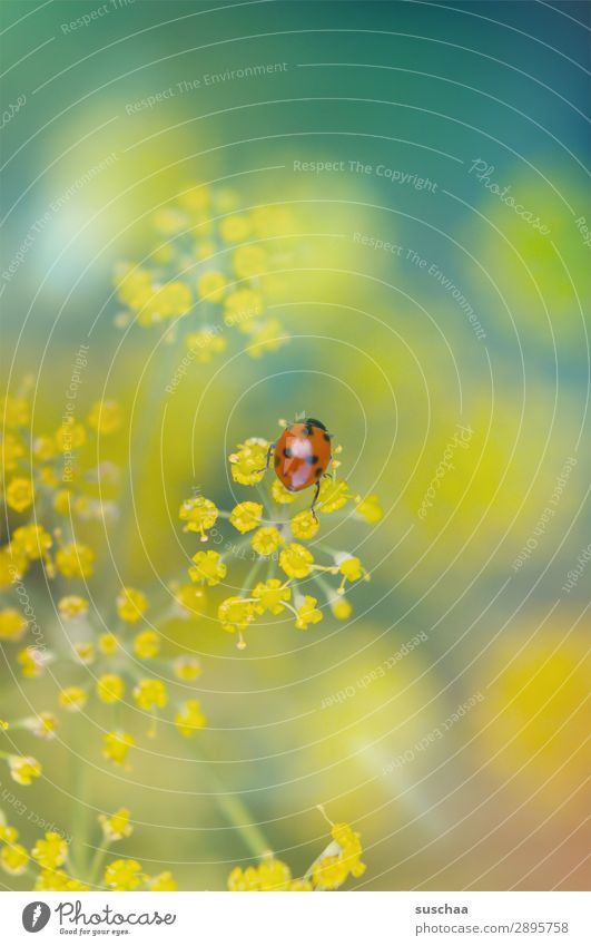 spring ladybird Flower Blossom Nature Garden out Spring Summer Wellness Exterior shot Plant herbaceous Dill Beautiful Insect Beetle Good luck charm Happy Easter