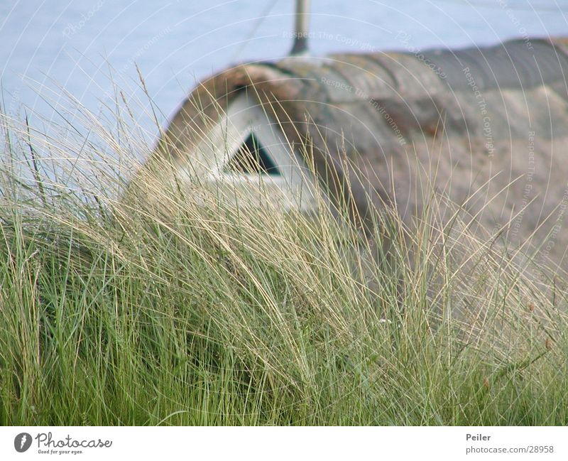 thatched house on Sylt Reet roof House (Residential Structure) Common Reed Grass Green Brown Europe Nature Blue North Sea Frisian house