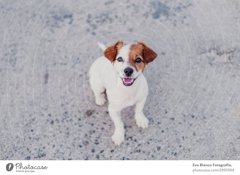 portrait outdoors of cute small dog looking into camera Dog Summer Beautiful White Animal Joy Black Lifestyle Adults Funny Happy Small Playing Friendship