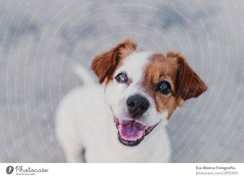 portrait of a cute small dog looking at camera Lifestyle Elegant Joy Beautiful Playing Summer Friendship Animal Sunrise Sunset Pet Dog 1 Observe Smiling Sit