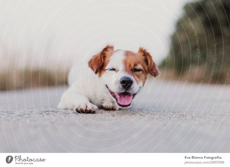portrait outdoors of a cute small dog smiling Sky Dog Summer Beautiful White Animal Joy Black Lifestyle Adults Funny Happy Small Playing Friendship Field