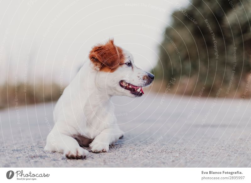 portrait outdoors of a cute small dog lying on the floor Dog Summer Beautiful White Animal Joy Black Lifestyle Adults Funny Happy Small Playing Friendship