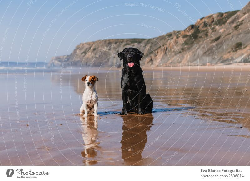 two happy dogs having fun at the beach. Sitting by sheashore Lifestyle Joy Happy Beautiful Relaxation Playing Hunting Vacation & Travel Summer Sun Beach Ocean