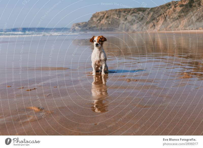 beautiful small dog sitting on the sea shore Lifestyle Joy Happy Beautiful Relaxation Playing Hunting Vacation & Travel Summer Sun Beach Ocean Friendship Nature
