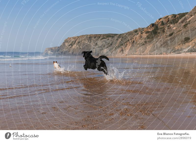 two happy dogs having fun at the beach. Running Vacation & Travel Nature Dog Summer Blue Beautiful White Sun Ocean Relaxation Animal Joy Beach Lifestyle Coast