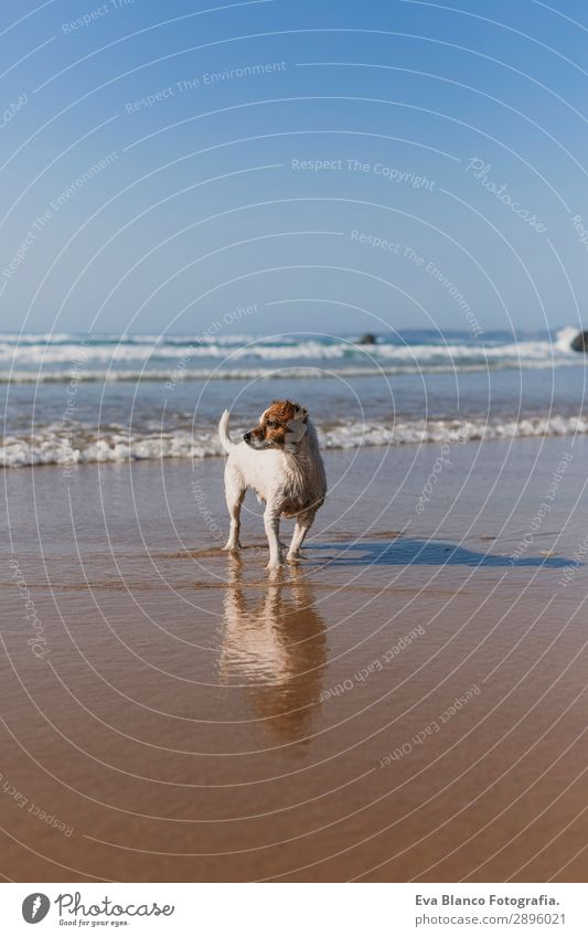 beautiful small dog on the sea shore Lifestyle Joy Happy Beautiful Relaxation Playing Hunting Vacation & Travel Summer Sun Beach Ocean Friendship Nature Animal