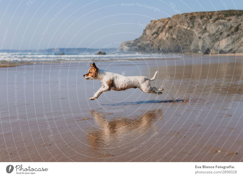 beautiful small dog running by the sea shore Lifestyle Joy Happy Beautiful Relaxation Playing Hunting Vacation & Travel Summer Sun Beach Ocean Friendship Nature