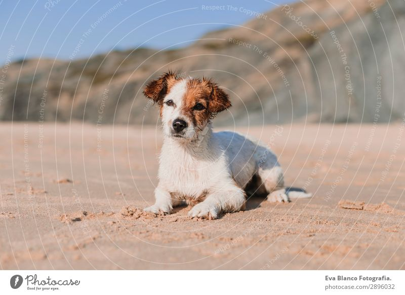 happy cute young small dog having fun at the beach Vacation & Travel Nature Dog Summer Blue White Sun Ocean Relaxation Animal Joy Beach Lifestyle Warmth Yellow
