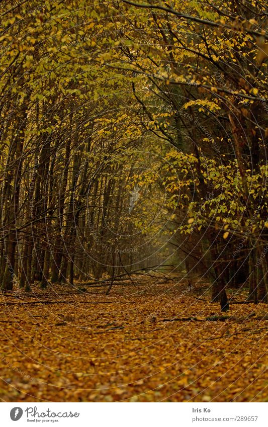 Nature Green Plant Tree Colour Leaf Calm Landscape Forest Yellow Environment Autumn Lanes & trails Moody Brown Natural