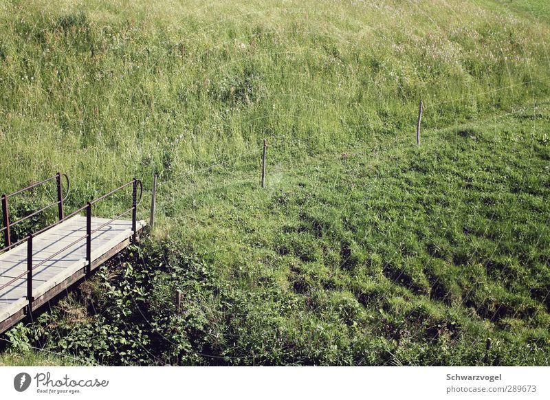 Nature Vacation & Travel Plant Landscape Relaxation Environment Meadow Grass Lanes & trails Freedom Leisure and hobbies Contentment Hiking Beautiful weather