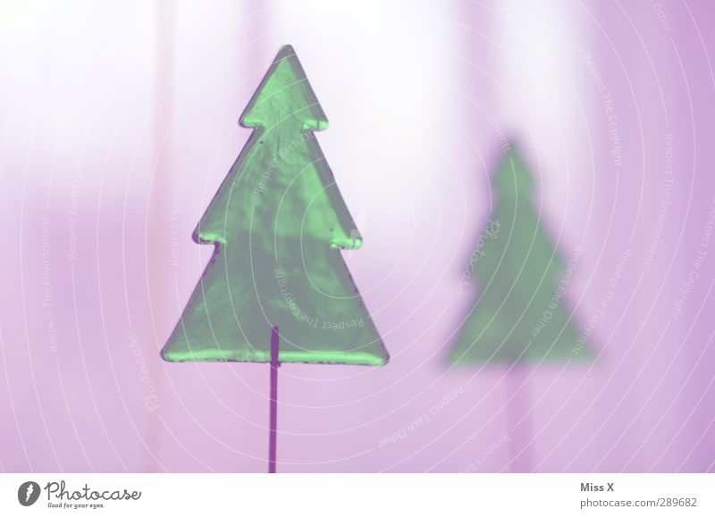 Christmas tree Christmas & Advent Winter Tree Illuminate Green Violet Fir tree Christmas decoration Glass Transparent Colour photo Close-up Deserted