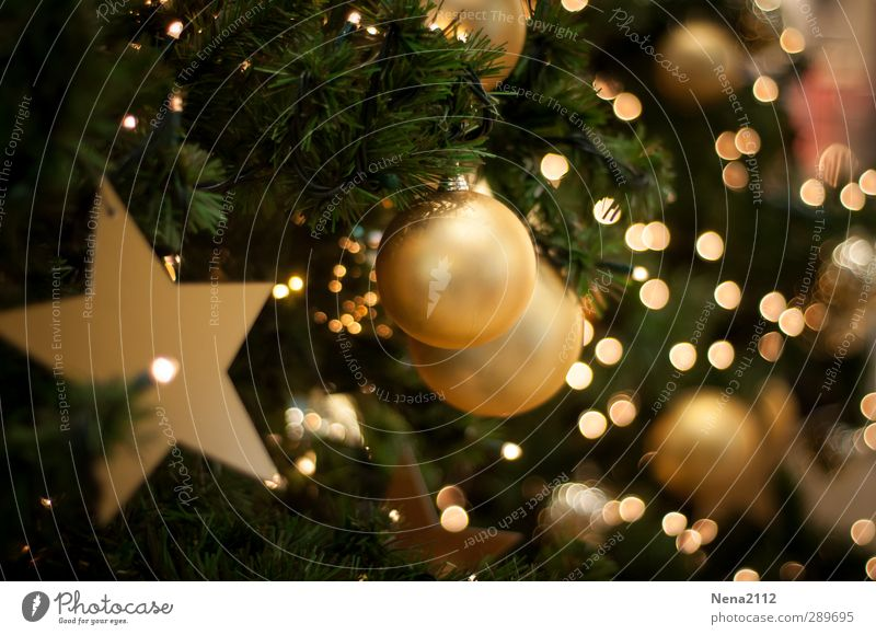 Christmas & Advent Green Winter Feasts & Celebrations Elegant Gold Star (Symbol) Christmas tree Sphere Fir tree Living room Christmas decoration December