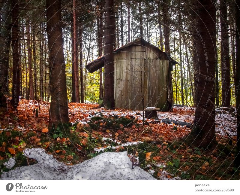 stable Landscape Autumn Winter Ice Frost Snow Tree Forest Oasis Deserted Hut Wood Modest Hope Beech leaf Fir tree Spruce Ladder Barn Loneliness Safe haven