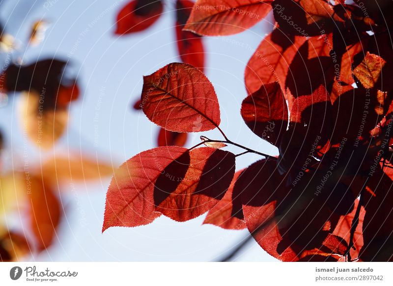red tree leaves texture in springtime Tree Branch Leaf Red Nature Abstract Consistency Exterior shot Neutral Background Beauty Photography Fragile Fresh Spring