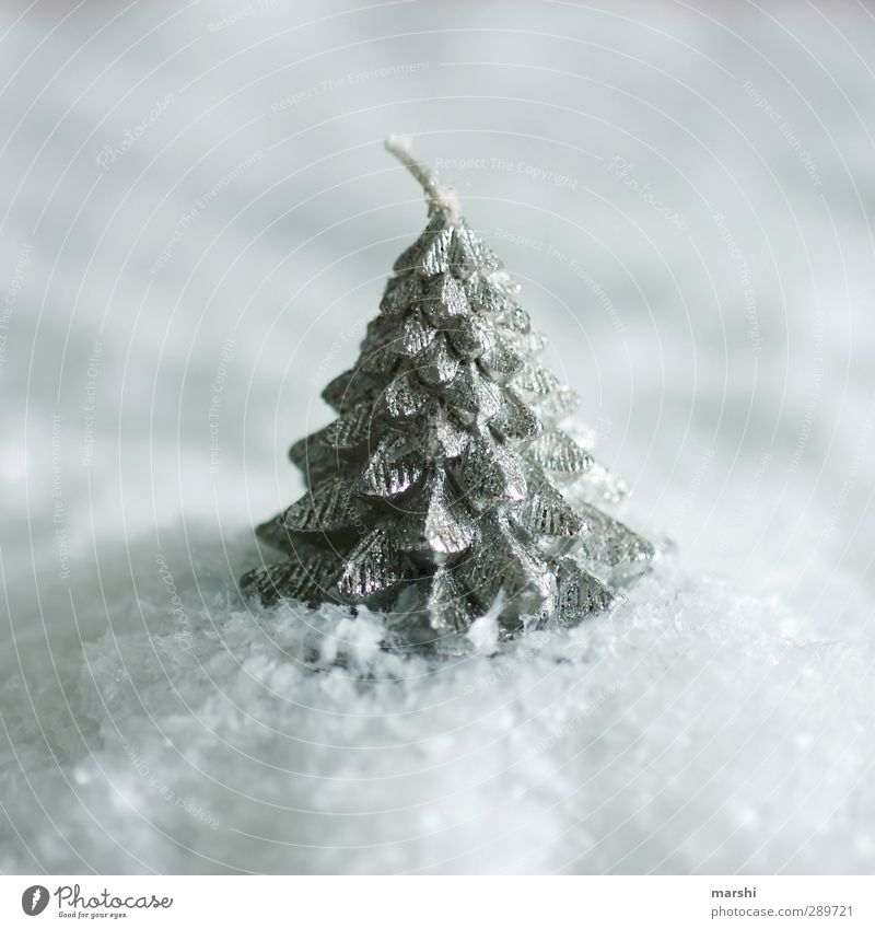 White Christmas Winter Tree Christmas & Advent Snowfall Candle Exterior shot Close-up Detail