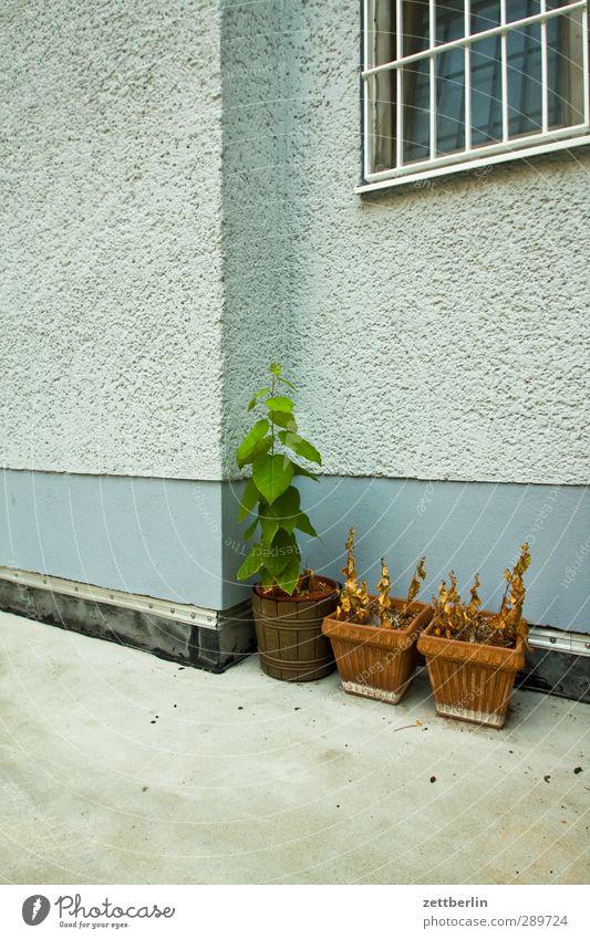 flowerpots Autumn Plant Leaf Foliage plant Agricultural crop Pot plant Garden House (Residential Structure) Manmade structures Building Architecture