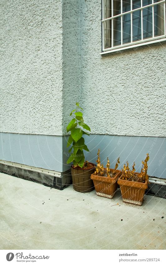 Plant Leaf Loneliness House (Residential Structure) Window Wall (building) Autumn Berlin Architecture Wall (barrier) Building Garden Corner Manmade structures