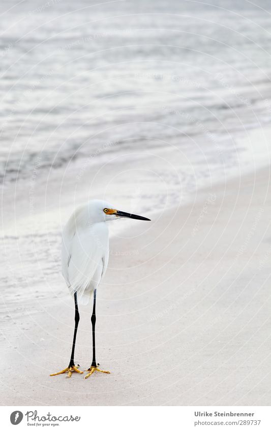Nature Water White Ocean Animal Environment Spring Sand Bird Waves Wild animal Elegant Stand Observe Curiosity Metal coil