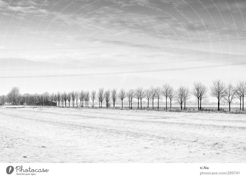 Glædelig Jul! Landscape Winter Ice Frost Snow Tree Freeze Cold Gray Black Silver White Black & white photo Exterior shot Copy Space top Copy Space bottom Light