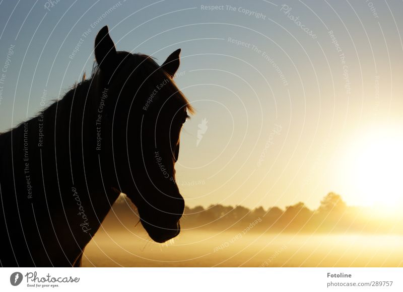 Sky Nature Plant Tree Sun Animal Landscape Environment Meadow Autumn Bright Natural Fog Beautiful weather Horse Pelt