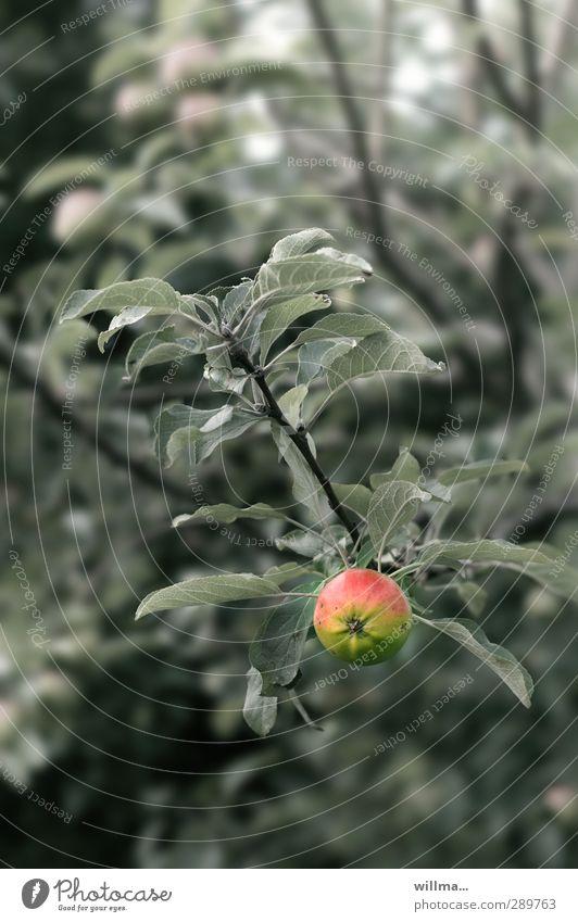 Tree Leaf Healthy Fresh Apple Apple tree