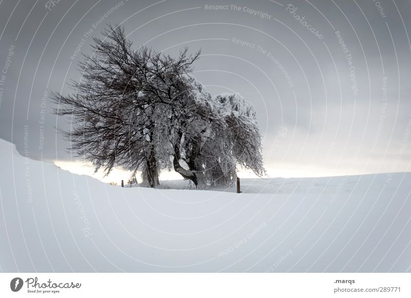 Sky Nature Loneliness Winter Landscape Environment Cold Snow Life Horizon Moody Ice Weather Climate Idyll Trip