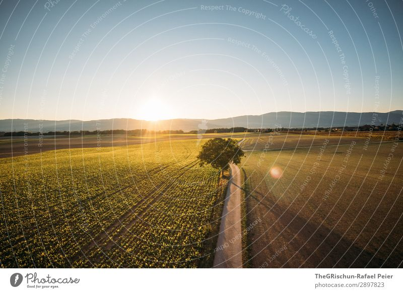 Swiss Sunset Environment Nature Landscape Blue Brown Yellow Green Country road Tree Field Agriculture Switzerland Moody Shadow Light Colour photo Exterior shot