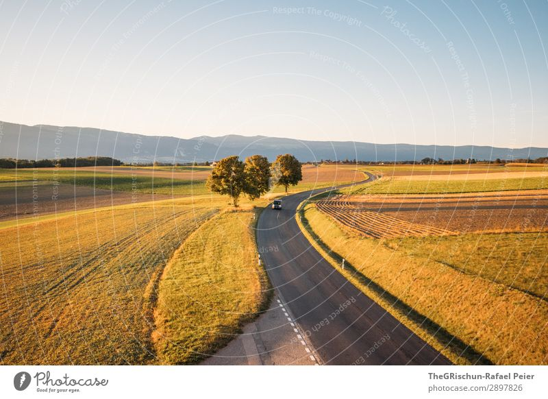Swiss Sunset Environment Nature Landscape Blue Brown Yellow Green Orange Black Street Tree Shadow Light Field Car Agriculture Colour photo Copy Space top
