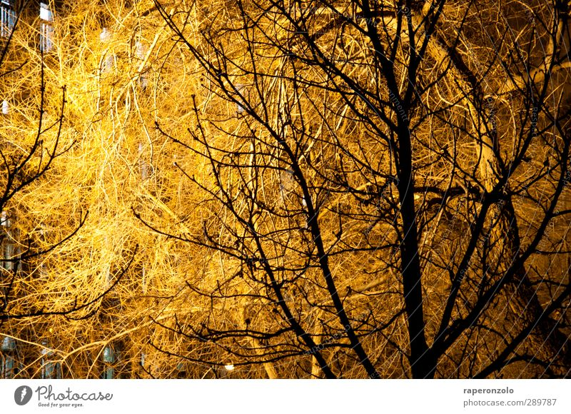 Nature Tree Winter Environment Window Dark Warmth Garden Lighting Bright Brown Park Illuminate Branch Outskirts Twigs and branches