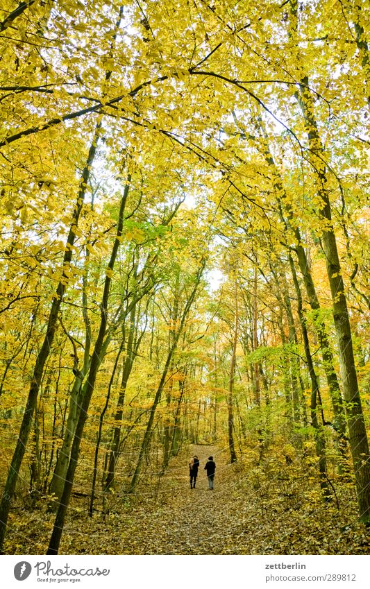 Human being Leaf Forest Autumn Berlin Couple In pairs To go for a walk Footpath Autumn leaves Promenade November October Brandenburg Leaf canopy Deciduous forest