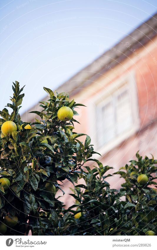 Neighbor fruit. Art Esthetic Mediterranean House (Residential Structure) Car Window Garden Lemon Portugal Vacation & Travel Vacation photo Vacation mood Green