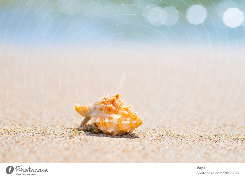 Macro shot of shell at sand beach Lifestyle Beautiful Relaxation Leisure and hobbies Vacation & Travel Tourism Trip Adventure Summer Summer vacation Sun Beach