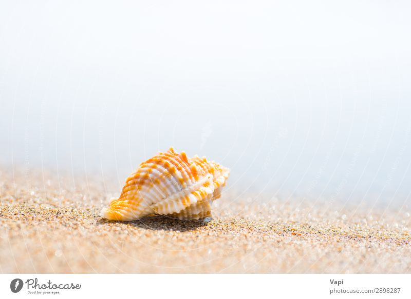 Macro shot of shell at sand beach Sky Vacation & Travel Nature Summer Blue Beautiful Water White Landscape Red Sun Ocean Relaxation Animal Beach Lifestyle