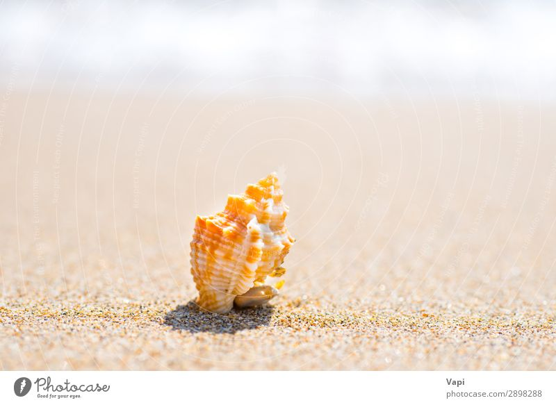 Macro shot of shell at sand beach Vacation & Travel Nature Summer Blue Beautiful Water White Landscape Red Sun Ocean Relaxation Animal Beach Yellow Environment